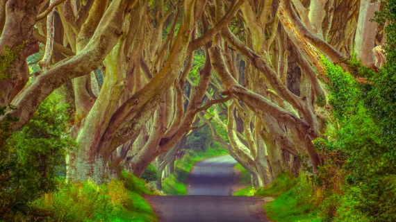 Dark Hedges en Irlanda del Norte